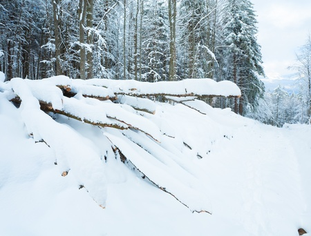 earthroad: Snowbound winter earthroad through mountain forest and saw down trees Stock Photo