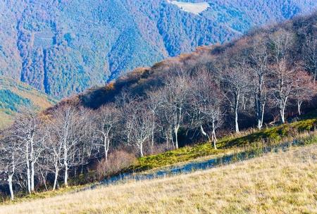 stark: Autumn stark bare trees on forest edge (Carpathian mountains, Ukraine).