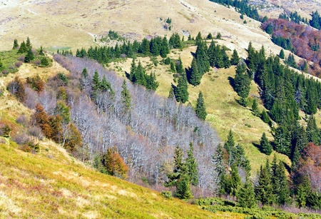 stark: Autumn mountains  with a stark bare trees on forest mountainside edge (Carpathian, Ukraine).
