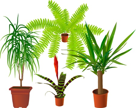Window plants collection (vector illustration) Vector