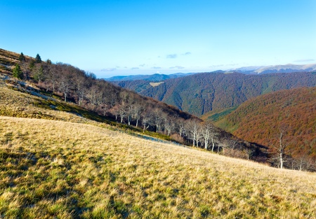 stark: Autumn mountains  with a stark bare trees on forest edge in front (Carpathian, Ukraine). Stock Photo