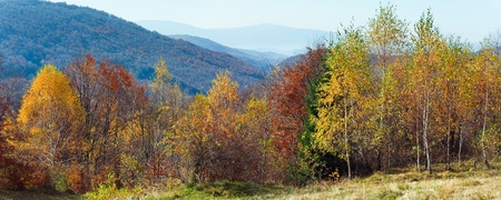 Autumn mountain panorama and birches forest  in front. (Carpathian Mts, Ukraine). Two shots stitch image.
