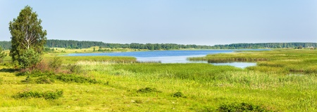 rushy: Summer rushy lake view with small grove on opposite shore. Two  shots stitch image.