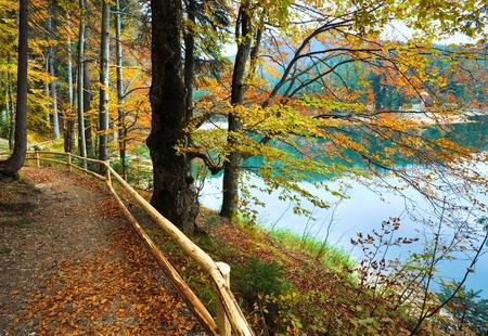 beech leaf: Mountain Synevir lake view through autumn tree twigs