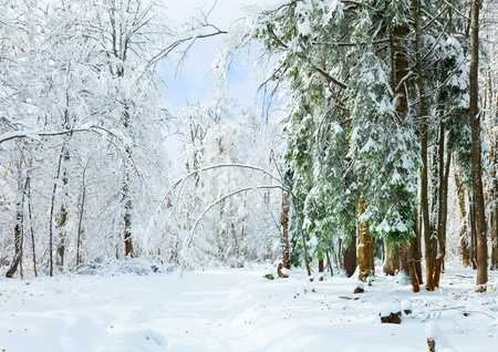 snowbound: Snowbound winter earthroad through beautiful  mountain forest Stock Photo