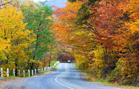 gold road: Autumn winding secondary road in the mountain forest Stock Photo