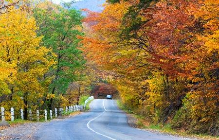 Herfst bochtige secundaire wegen in de bergen bos