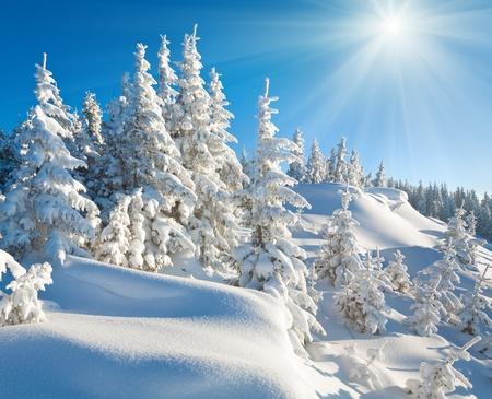 winter calm mountain landscape with beautiful fir trees  on slope and sunshine (Kukol Mount, Carpathian Mountains, Ukraine) Standard-Bild