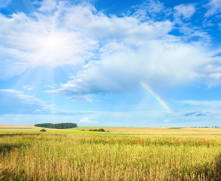 Rainbow and sunshine in blue cloudy sky above summer wheat field  . photo