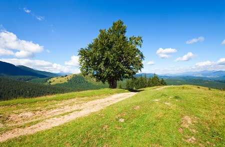 Summer mountain landscape with rural road and lonely tree photo