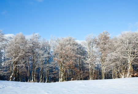 October mountain beech forest edge and first winter snow Stock Photo