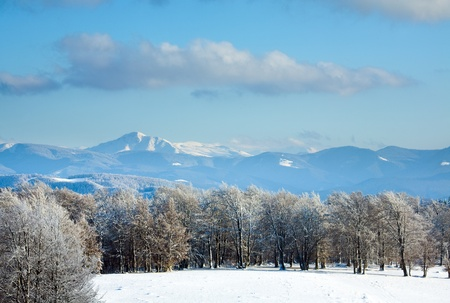 October mountain beech forest edge and first winter snow (Goverla Mount in far, Ukraine) photo
