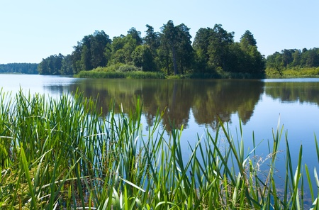 rushy: Summer rushy lake view with small grove on opposite shore