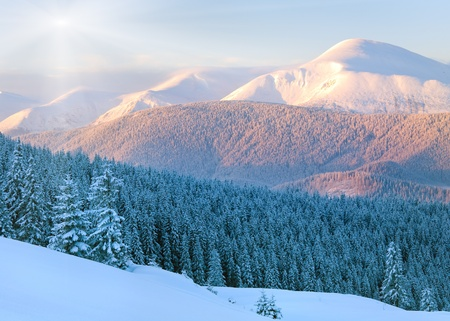 Sunrise and winter rime and snow covered fir trees on mountainside. View from Kukol Mount.  (Carpathian Mountains, Ukraine) photo