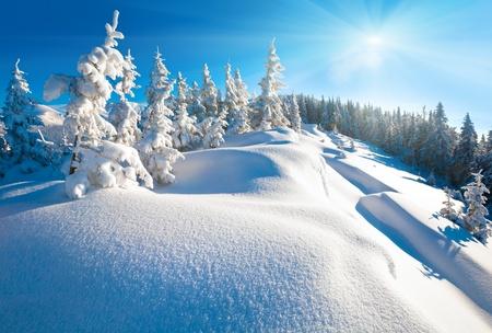 Morning winter calm mountain landscape with beautiful fir trees  on slope (Kukol Mount, Carpathian Mountains, Ukraine)