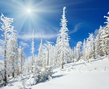winter snow covered fir trees on mountainside on blue sky with sunshine background photo