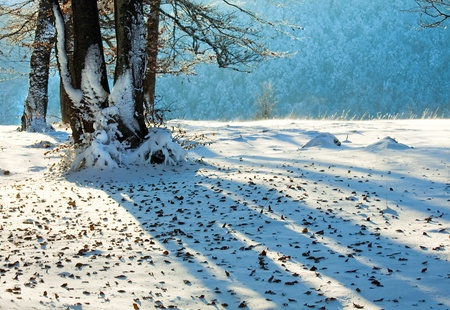 October mountain beech forest with first winter snow and last autumn leaves over photo