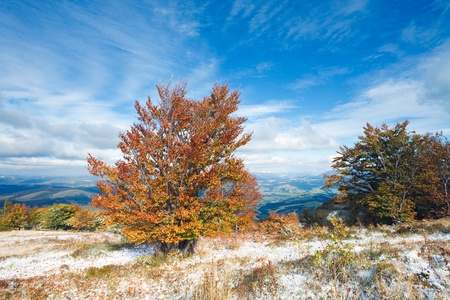 October Carpathian mountain plateau with first winter snow and autumn colorful tree photo