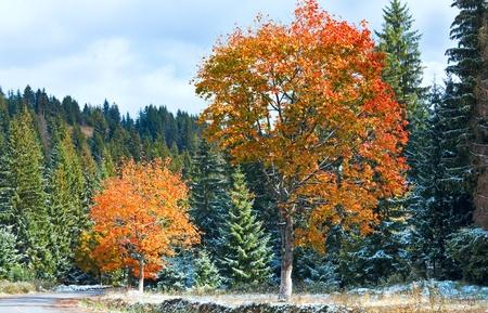 First winter snow and autumn colorful foliage near mountain secondary road (Carpathian, Ukraine) photo