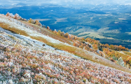 October Carpathian mountain Borghava plateau with first winter snow and autumn colourful bilberry bushes photo