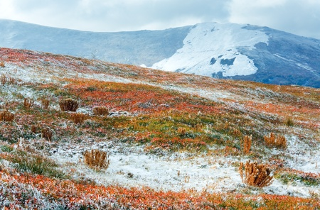 October Carpathian mountain Borghava plateau with first winter snow and autumn colorful bilberry bushes photo