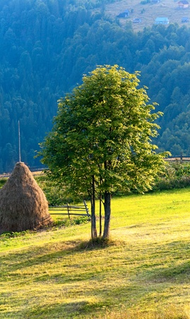 Summer mountain landscape with haystack and lonely tree Stock Photo