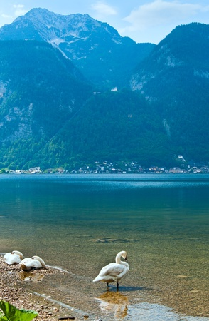 Beautiful summer Alpine  lake Hallstatter See view and swans on shore (Austria) photo