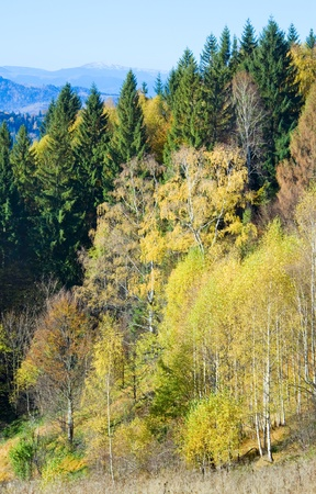 Autumn  mountain Nimchich pass (Carpathian, Ukraine) and colorful trees on hill. Stock Photo - 12886250