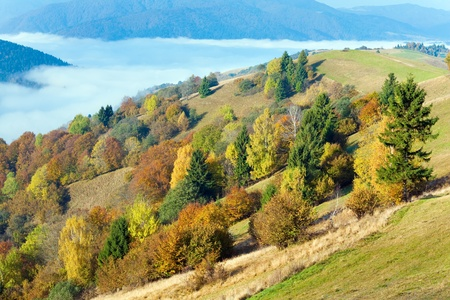 Sunny autumn mountain forest on mountainside (Carpathian, Ukraine) Stock Photo - 13250916