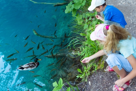 Two children feed the wild ducks and shoal of small fish in azure clean transparent lake photo