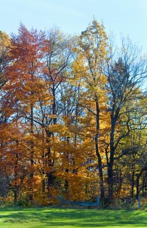 Autumn colorful trees on mountain hill Stock Photo