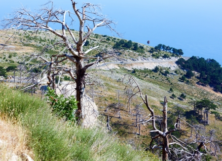 Summer  Llogara pass view  with dry trees and thistle on slope  and sea water surface(Albania) photo