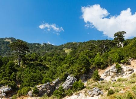 Summer  Llogara pass view with pine trees on mountainside (Albania) photo