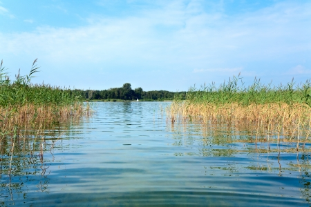 rushy: Summer rushy lake view with plants on water surface