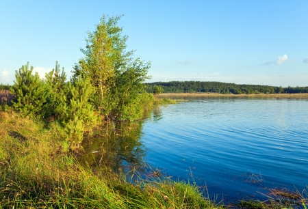 rushy: Summer rushy lake view with pine and small grove on opposite shore