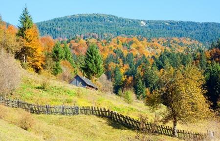 Sunny autumn mountain forest (on mountainside) photo