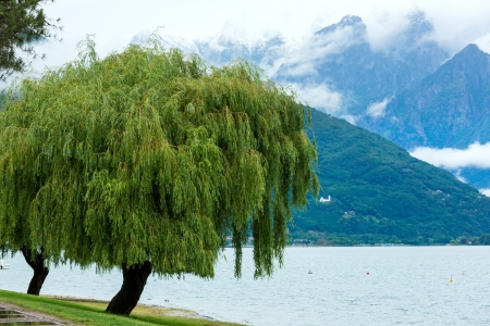 Lake Como (Italy) summer cloudy view with willow trees on shore photo