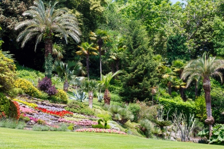 Blossoming colorful flowerbeds and palm trees in summer city park photo