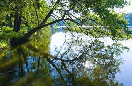 catchlight: Summer lake with patch of sunlight and tree reflection on water surface.