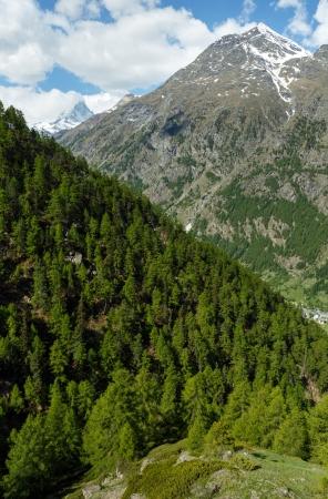 tableland: Summer Matterhorn mountain view (Alps, Switzerland, Zermatt)