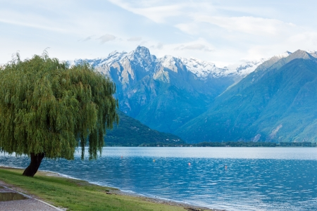Lake Como (Italy) summer cloudy view with willow tree on shore and snow on mount top. photo