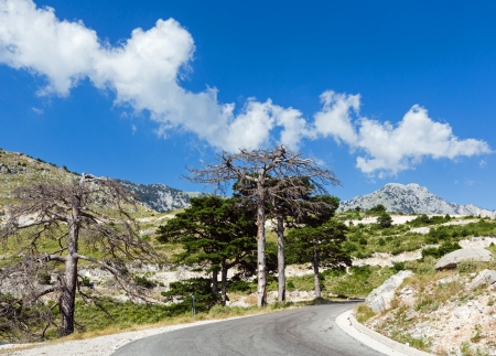Summer  Llogara pass view  with road and dry trees on roadside(Albania) photo