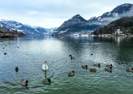 Cloudy winter Alpine  lake Grundlsee view (Austria) with wild ducks and swan on water. photo