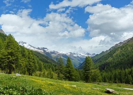 Yellow dandelion flowers on summer mountain slope (Alps, Switzerland) photo