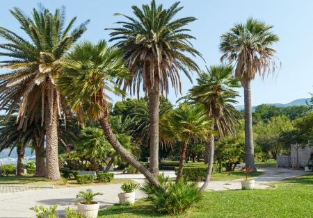 A beautiful summer park with palm trees morning view near Villa Milocher (Montenegro, Budva) photo