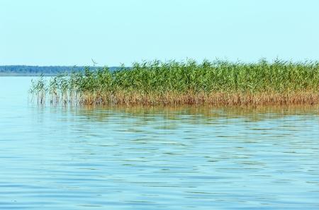rushy: Summer rushy lake view (Svityaz,  Shatsky National Natural Park, Ukraine). Stock Photo