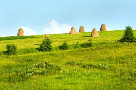 outskirts: Summer mountain village outskirts with haystacks on field (Carpathian, Ukraine)