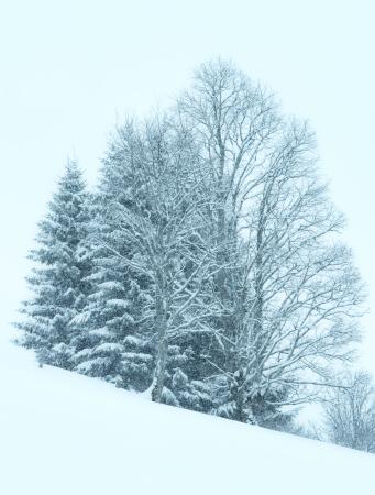 dull: Winter mountain foggy dull day snowfall landscape