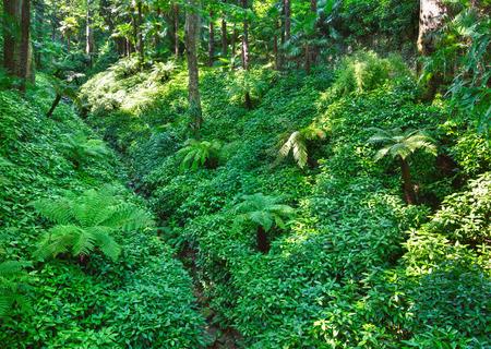 subtropical: Path through summer city park grove with subtropical plants