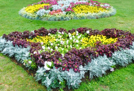 flowerbeds: Blossoming colorful flowerbeds in autumn city park